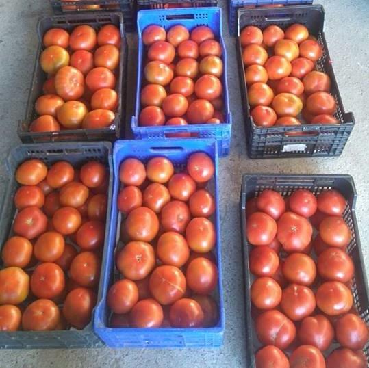 tomates 4